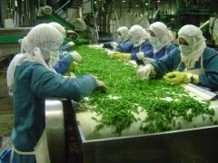 خضار مجمد ، فاكهة ، سلع غذائية لمصانع القوات المسلحة : مطاعم - في ...